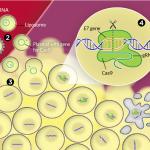 CRISPR Quashes Cancer in Mice
